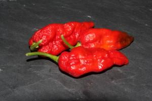 naga morich peperoncino