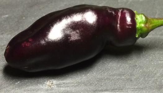 Pimenta de Neyde