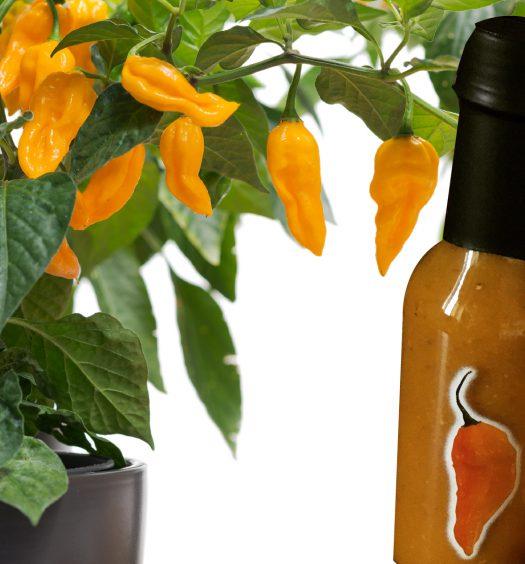 salsa fatalii cajohns